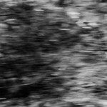 Mélanophila I_10, 2008, Fresson process, 110 x 70 cm